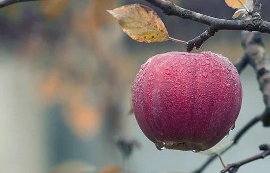 apple-1122537__340e63