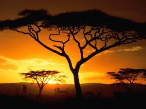 Keniya-Afrika