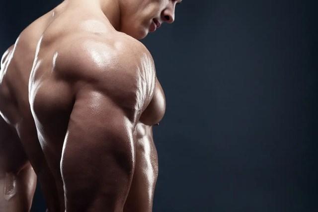 anatomy of shoulders