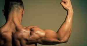 the difference between bicep and tricep