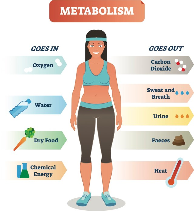 How activities affect the metabolism