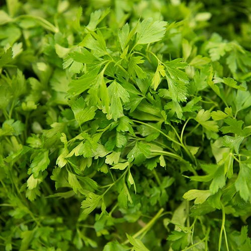 Parsley - TFC Supermarkets