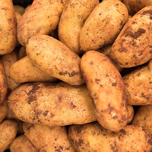 Potato - TFC Supermarkets