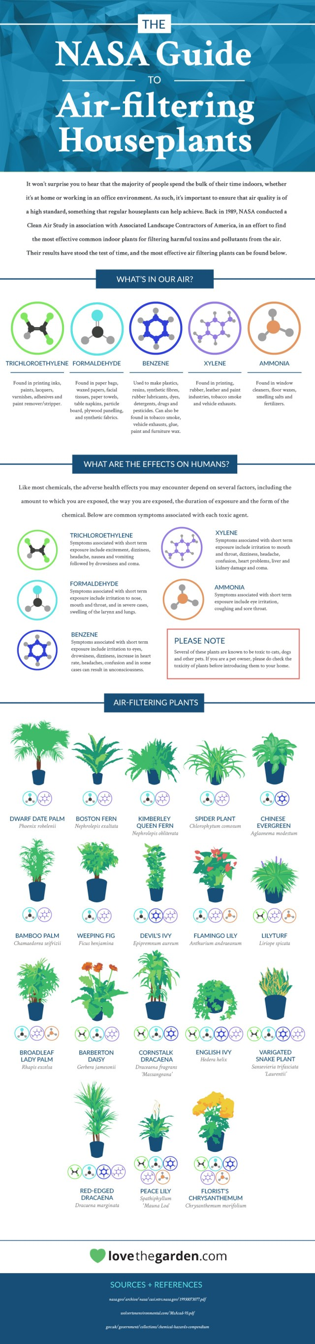 NASA: These 18 Houseplants Help Purify Your Home's Air