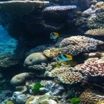 7 Facts Great Barrier Reef