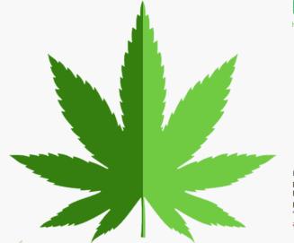 An image of a fresh hemp leaf