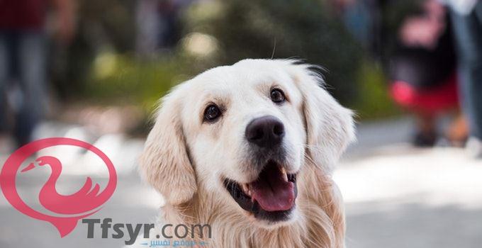 تفسير حلم رؤية الكلب فى المنام لابن سيرين 2019