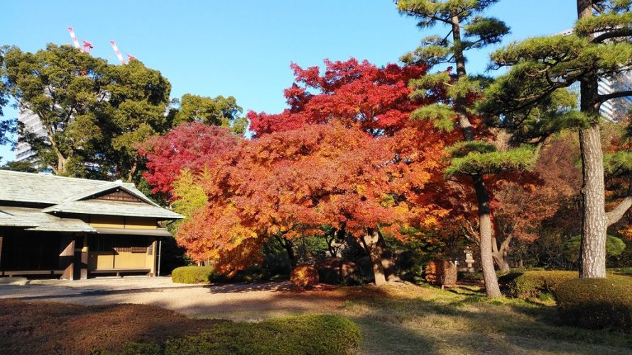 Tour Report on 14 December 2019, Winter has already started in the East Garden of the Imperial Palace