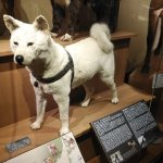 Tour Report on 12 January 2020, Meet the legendary dogs at National Museum of Science and Nature!