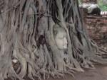 世界遺産。バンコクが栄える前は、ここアユタヤがタイの中心だったとのこと。 それも昔の事。250年で仏像が木に取り込まれてしまいました。