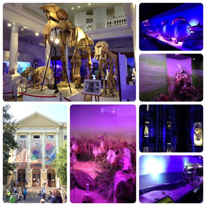 ブカレストの自然史博物館。
