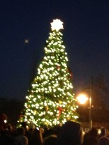 Lit tree - iphone camera :(
