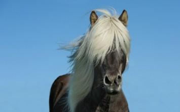 Лошади невероятно красивы! Но вы вряд ли видели эти дикие породы