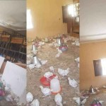 Classroom Block In Borno State Converted Into A Poultry Farm As Education Is Halted Due To COVID-19 (Photos)