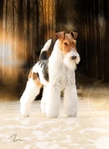 Foto cão fox terrier
