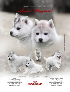 Propaganda Tunghat's Siberians - Husky Siberianos