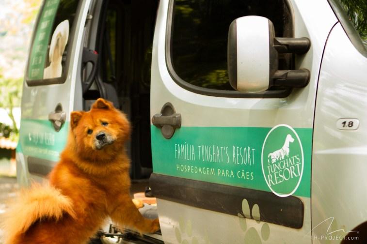 Foto cão carro de transporte