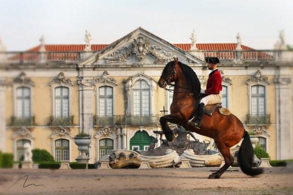 Foto cavalo cenário clássivo.