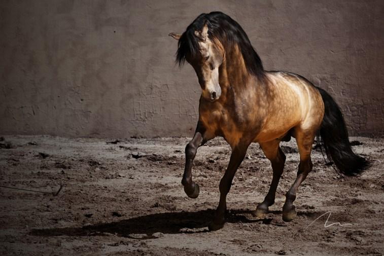 Foto cavalo correndo