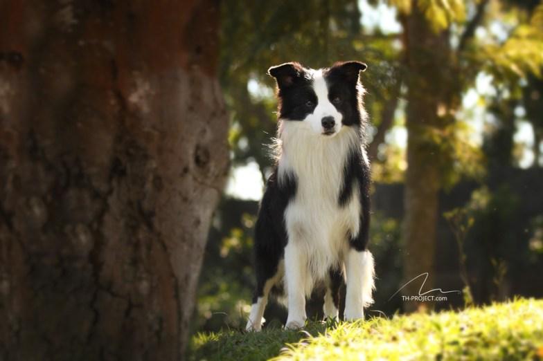 imagem fotografia cão no campo