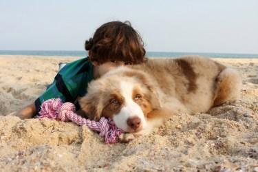imagem crianças e cão na praia
