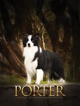 Imagem capa Porter CDF2014