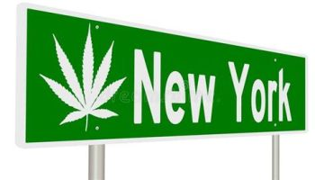 Image result for Image New York Weed