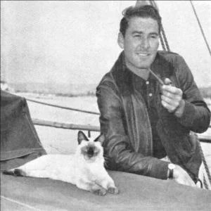 errol-flynn-siamese-cat