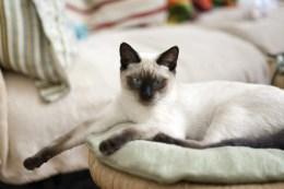 cat-882060