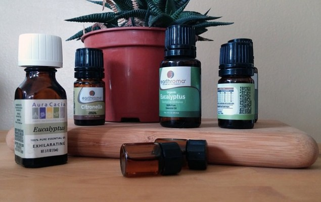 Bottles of eucalyptus essential oil