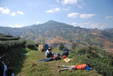 Teeplantagen-Arbeiter legen eine Pause ein
