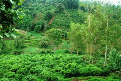 Blick vom Balkon unseres Bungalows in Doi Wawee auf Tee-Plantagen