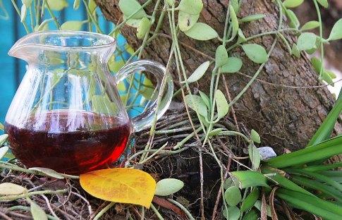 BlackPearls-Hibiscus-orchid_webformat