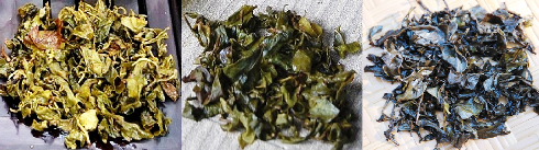 Jin Xuan Trinity: Spring Harvest Oolong, Hoarfrost Tea & Black Pearls
