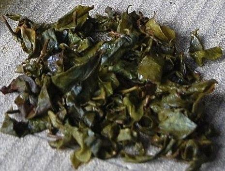 Winter- (Raureif-) Oolong Tee des Jin Xuan Kultivars in Doi Mae Salong: nasse Blätter nach dem Aufguss