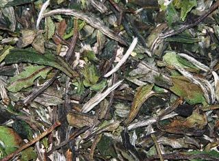 Pai Pu Tan Weißer Tee - Supercloseup