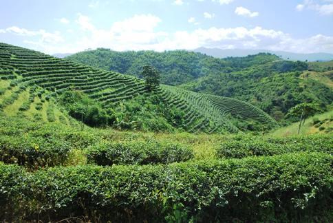 Teegarten außerhalb von Ban Hin Taek / Ban Thoed Thai