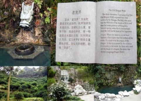 "Original ""Dragonwell""-Location nahe Hangzhou in China"