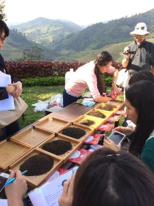 Exploring various teas at the tea course