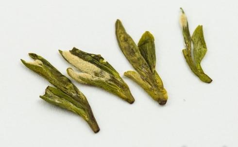 Wilder Spring Long Jing Drachenbrunnen Grüner Tee, Pflückstandard 2+1