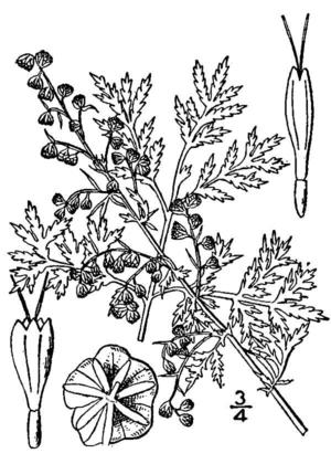 Teepflanze gilt in China seit mindestens 5000 Jahren als Heilkraut