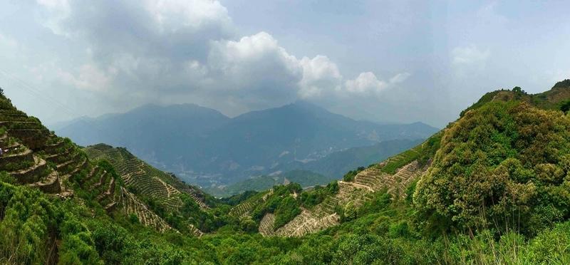 Fenghuangshan Berge (Phoenix Mountain) in Guangdong, Chinan