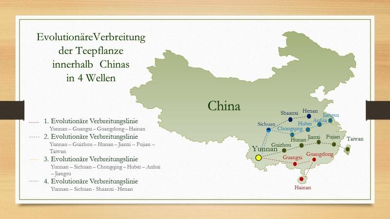 Evolutionäre Vebreitung der Teepflanze von Yunnan aus innerhalb Chinas