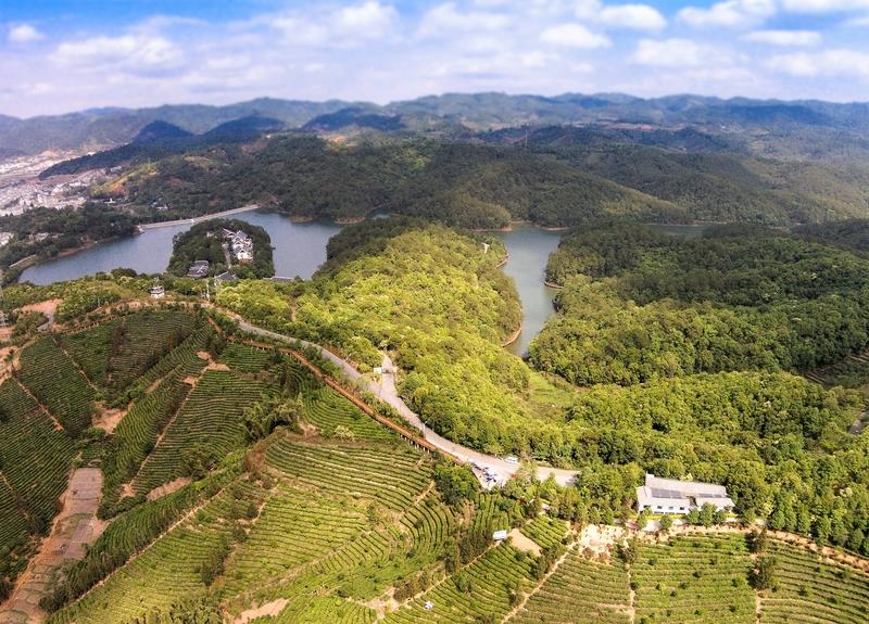 Yunnan - die Wiege des Teebaums