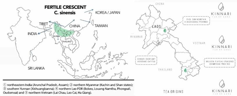 "Tee in Laos - Kinnari Map und ""Fertile Crescent"" = ""Fruchtbarer Halbmond"" (Camellia Sinensis)"