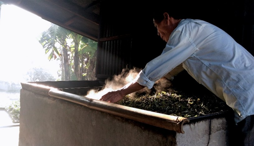 Manuelle Teeverarbeitung in Laos