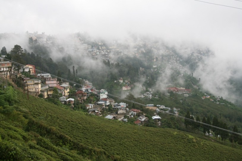 Tea Cultivation Region Darjeeling