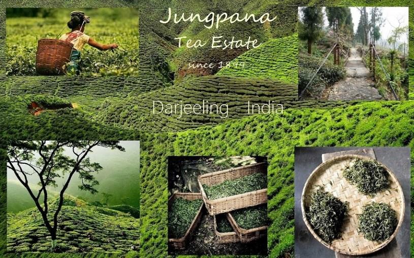 Jungpana Darjeeling Tea Estate