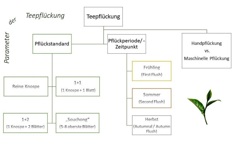 Parameter der Teepflückung