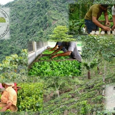 The Tea Leaf Theory - Vereinigung kleiner Teeerzeuger in Nordostindien mit Prinzipien naturnahen Anbaus und fairen Handels